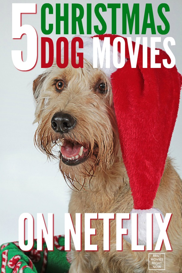 Our list of the best Christmas dog movies on Netflix will give you all the feels. Click to choose a funny, heart-warming Christmas movie.